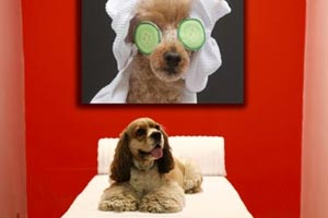 Doggy Massage at Luxe Pet HOtels