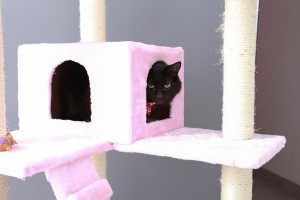 Cat boarding villa at Luxe Pet Hotels in Las Vegas
