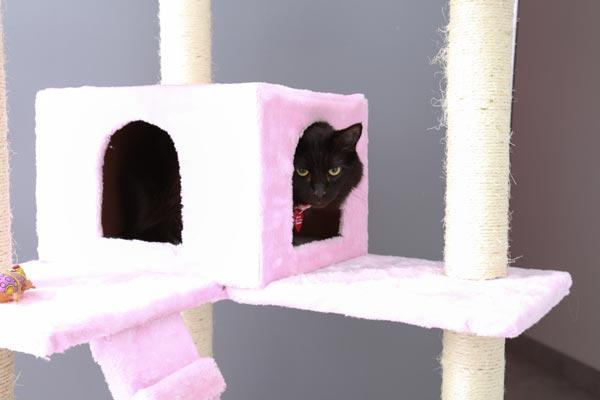 Luxury Cat Boarding In Las Vegas Nv Luxe Pet Hotels