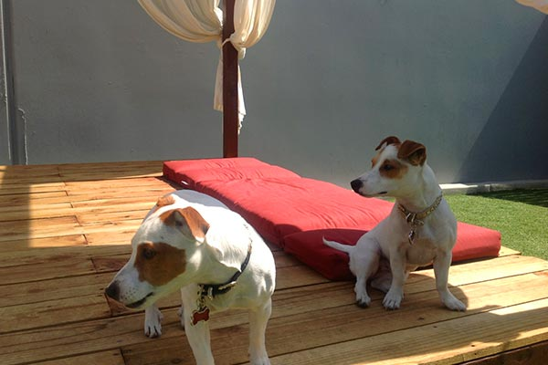 Doggy Day Care Guests Of Luxe Pet Hotels