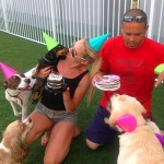 Doggy-Day-Care-guests-of-Luxe-Pet-Hotels-Las-Vegas-6