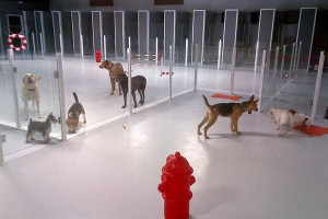 Indoor play time for dogs at Luxe Pet Hotels