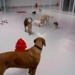 Indoor-play-time-at-Luxe-Pet-Hotels-3