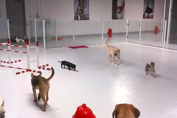 Indoor Play Time At Luxe Pet Hotels 5