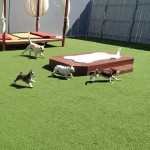 Outdoor-play-area-at-Luxe-Pet-Hotels-1