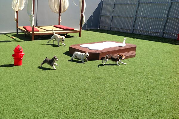 Outdoor Play Area At Luxe Pet Hotels 1