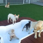 Outdoor-play-area-at-Luxe-Pet-Hotels-2