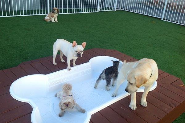 Outdoor Play Area At Luxe Pet Hotels 2