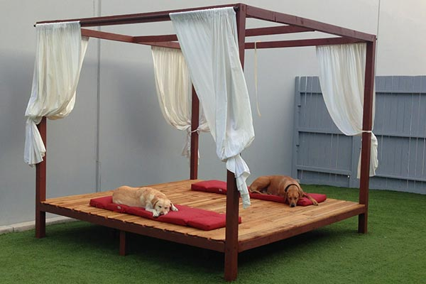 Luxe Pet Hotel Prices