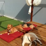 Outdoor-play-area-at-Luxe-Pet-Hotels-5