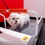 VIPet-Hotels-Doggy-Treadmills-5