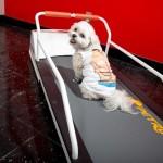 VIPet-Hotels-Doggy-Treadmills-7