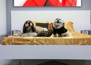 Luxe Pet Hotels Luxury Dog Boarding