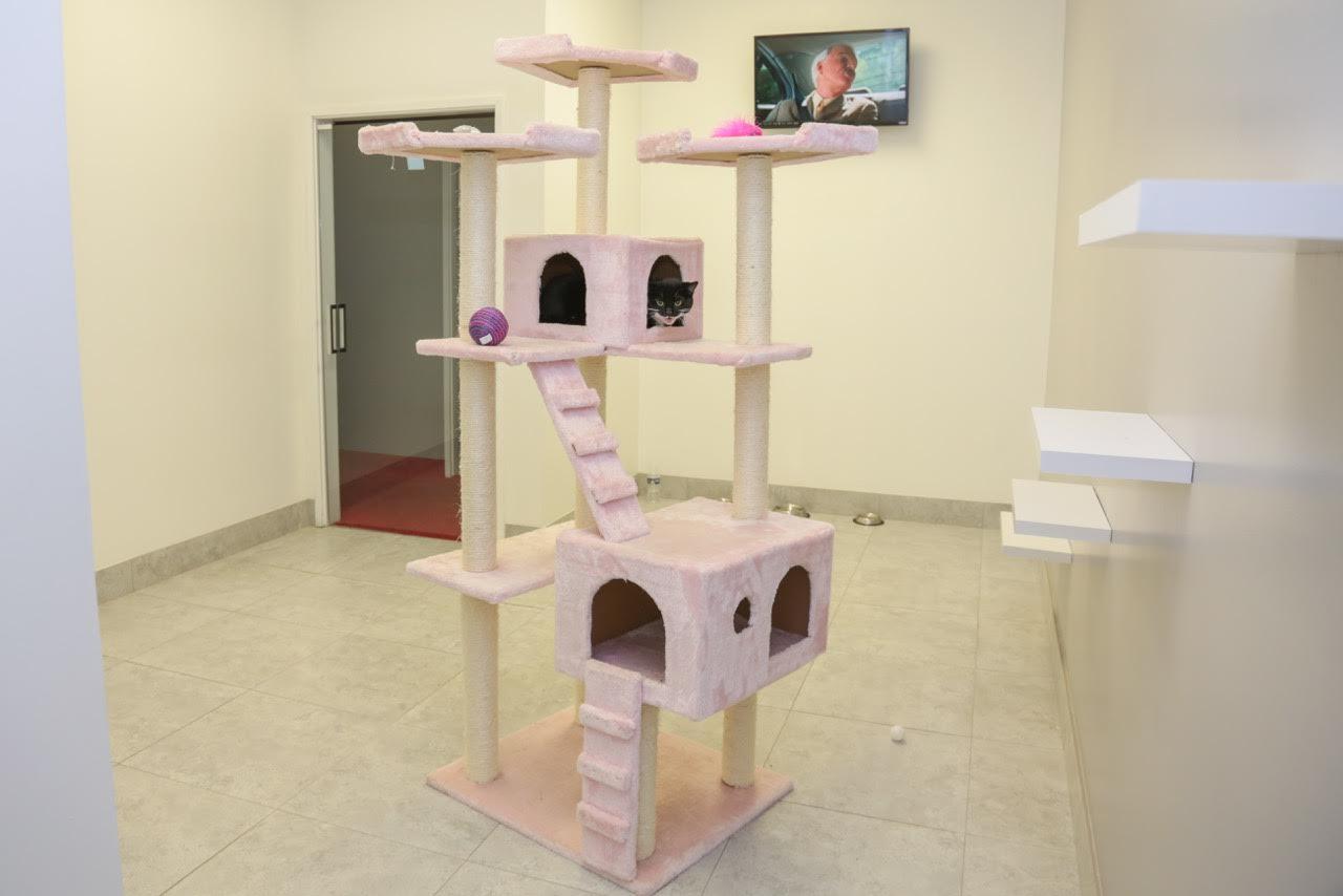 Luxury Cat Boarding in Las Vegas, NV - Luxe Pet Hotels